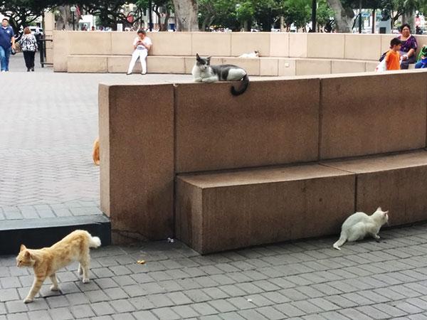 CatPark1